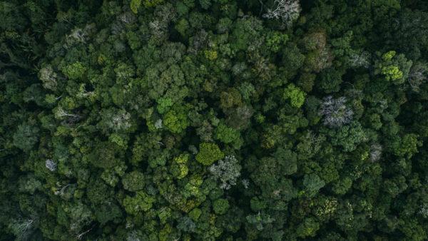 Mina Guli, 2017 | Overhead view the Amazon rainforest, Manaus, Brazil | via Flickr