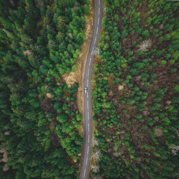 Scottish forest