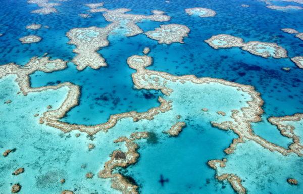 Ayanadak123, 2018 | Great Barrier Reef  near Airlie beach, Queensland | Wikimedia Commons