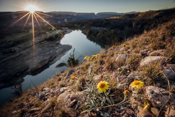 Wildflowers on the slopes above the Rio Grande, Texas