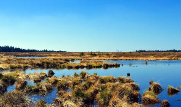 peat bog in the UK