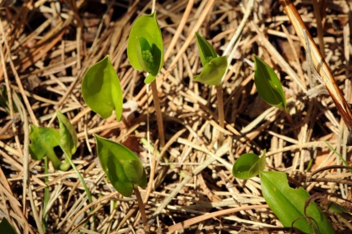 Green shoots by Matthew Fells