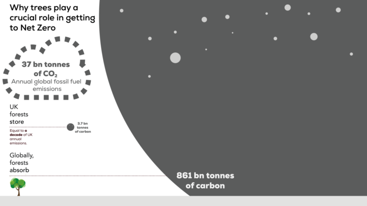 Visual representation of how much carbon forests store int he UK and globally.