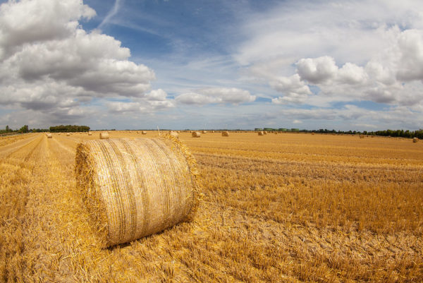 Emissions in agriculture and land use sectors are refusing to fall. Image: Geraint Rowland