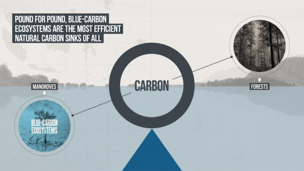 Mangroves and blue-carbon ecosystems are the most efficient natural carbon sinks of all