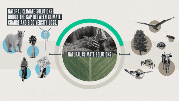 Natural climate solutions bridge the gap between climate change and biodiversity loss