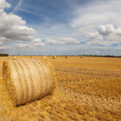 COVID: emissions drop, but not from land and agriculture. Why?