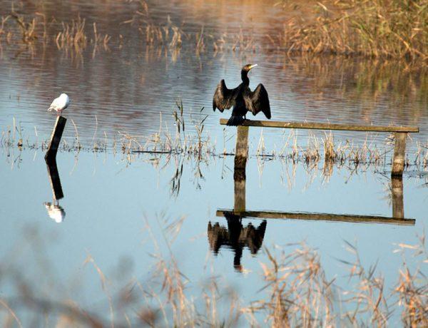 Flooded land affecting wildlife