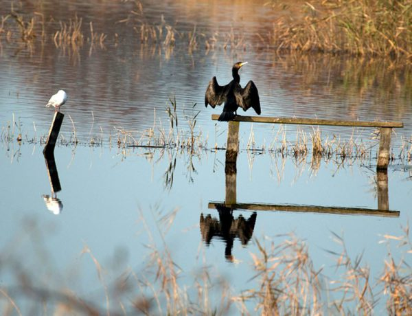 Flooded land affecting wildlife