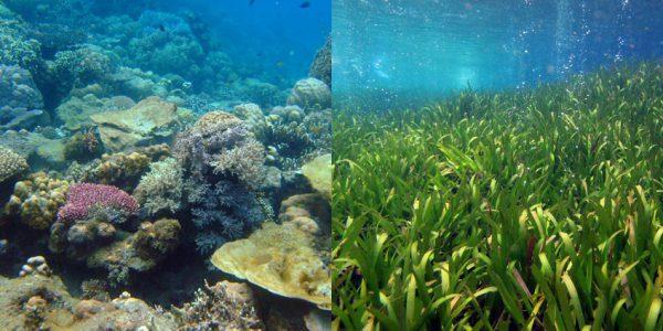 Papua New Guinea coral ecosystem